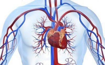 Reducir los factores de riesgos cardiovasculares de forma natural.